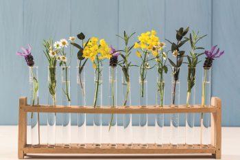 Alle Auro-Produkte sind natürlichen Ursprungs. (Foto: Auro)