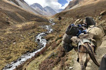 Eine Vielfalt an Landschaften, Flora und Fauna, gab es auf der strapaziösen Trekkingroute zu entdecken. Foto: Privat
